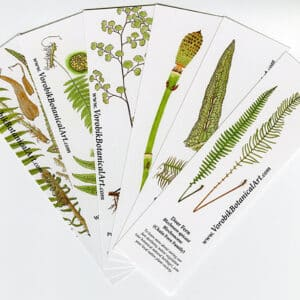 Bookmark Set: Ferns