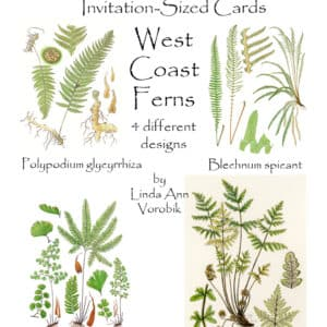 West Coast Ferns: Invitation-sized card pack.