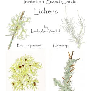 Lichens: Invitation-Sized 4 Pack Notecards