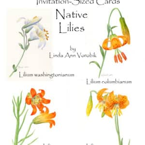 Native Lilies: Invitation-Sized 4 Pack Notecards