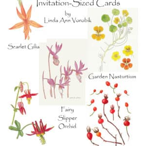Botanical Assortment: Invitation-Sized 4 Pack Notecards