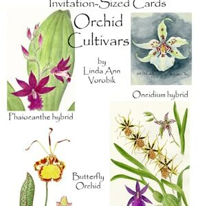 Orchid Cultivars: Invitation-Sized 4 Pack Notecards