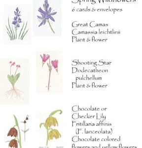 Linda's Wildflowers Botanical Art Card set including two images each of Camas, Chocolate Lily, and Shooting Star.